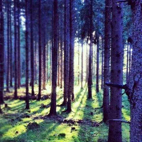 Woods in Kattala, Sweden