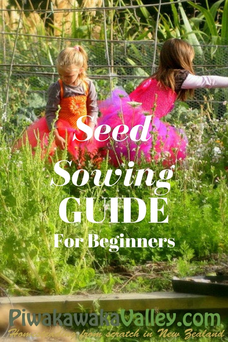 homesteading in nz seed sowing guide for beginners seed sowing timetable us zone - Deckideen Nz
