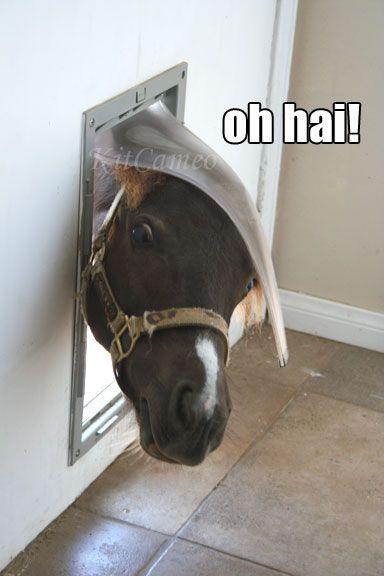 http://kitcameo.blogspot.jp/2011/08/mini-horse-in-doggie-door.html