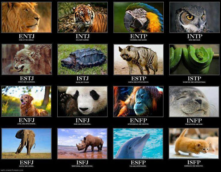 So, I'm a tiger.