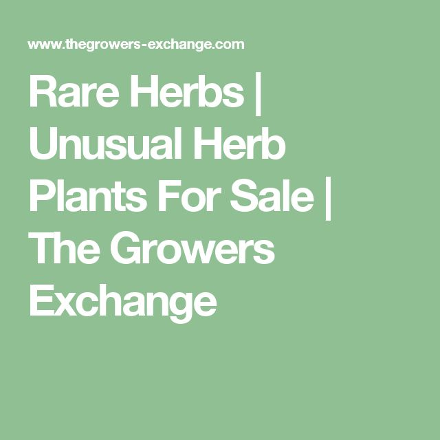 Rare Herbs | Unusual Herb Plants For Sale | The Growers Exchange