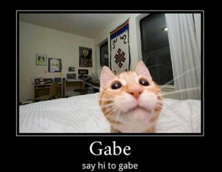 Say Hi To Gabe Funny Looking Cats Cute Animal Memes Cats