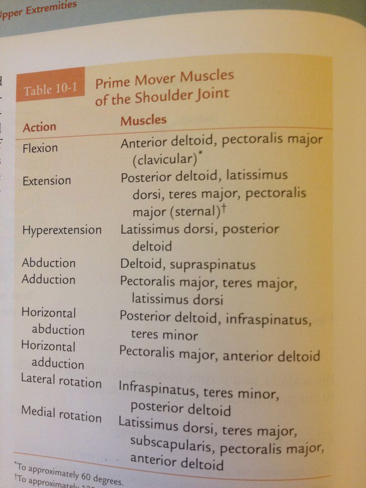 Prime Movers of the Shoulder Joint    From Cilincal Kinesiology & Anatomy - Lippert