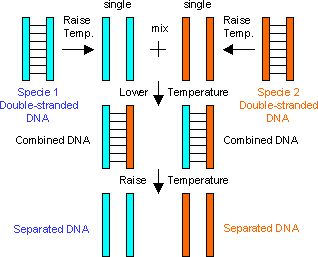 Introduction to genetics a molecular approach pdf995