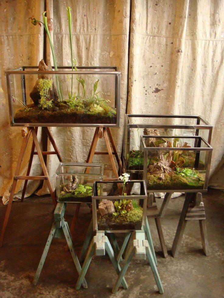 Vintage aquariums planted with carnivorous plants