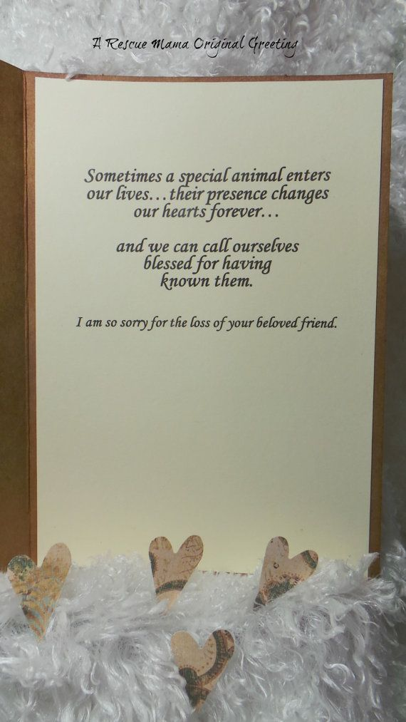 Best 25+ Pet sympathy quotes ideas on Pinterest Loss of cat - sympathy message