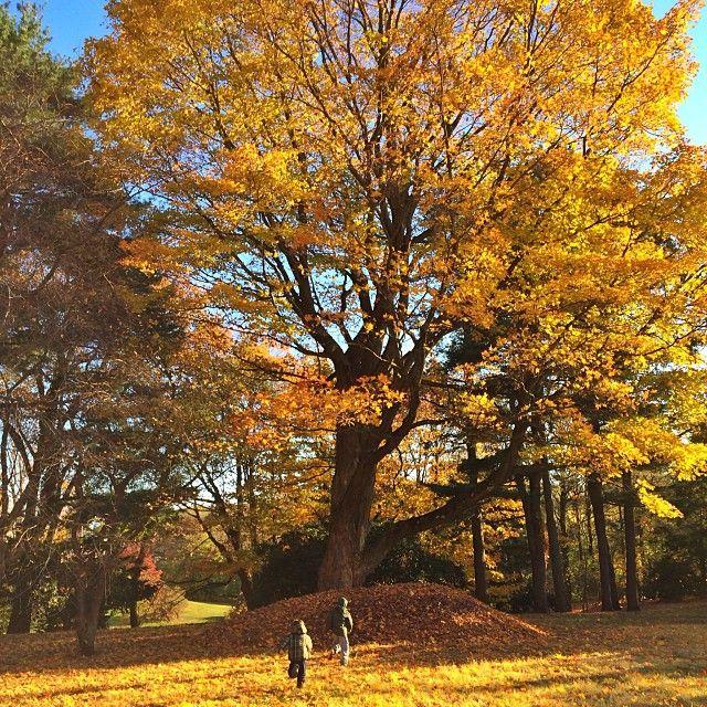 #grateful #brothers #love #bennyjack #autumnfun ❤️❤️❤️#gratidao #irmaos #amor #bennyjack #diversaonoutono by Gisele Bündchen