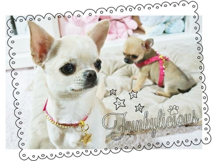 Funkylicious Collares y Arneses para perros pequeños