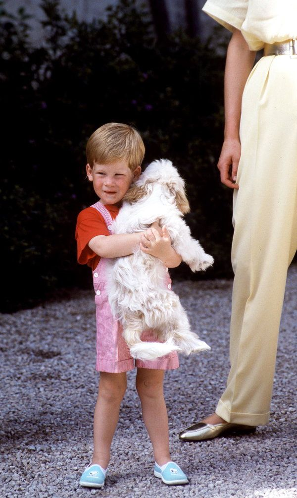 MAJORCA, SPAIN - AUGUST 08:  Prince Henry (harry) Carrys A Dog In Majorca.  (Photo by Tim Graham/Getty Images)
