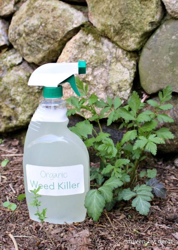 An effective organic weed killer made with 3 simple ingredients you already have in your pantry