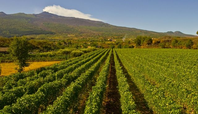 Sicily - tourism, vineyards and Sicily tours