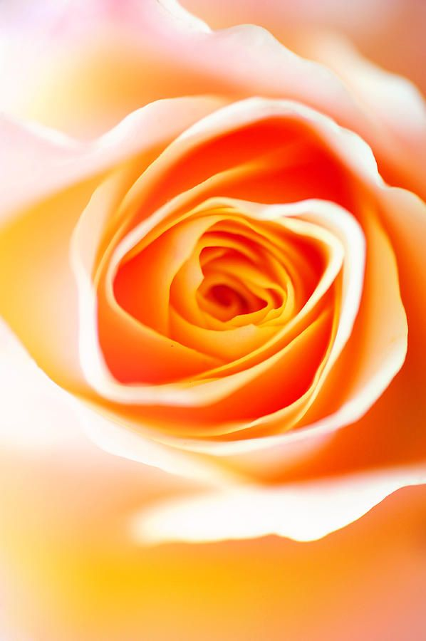 Orange Deligh by Jenny Rainbow