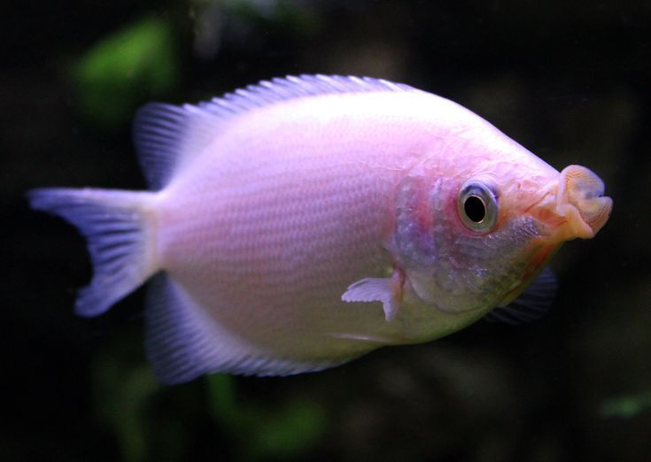 Popular Fish Species For Your Freshwater Aquarium Freshwater Aquarium Fish Breeding Fish