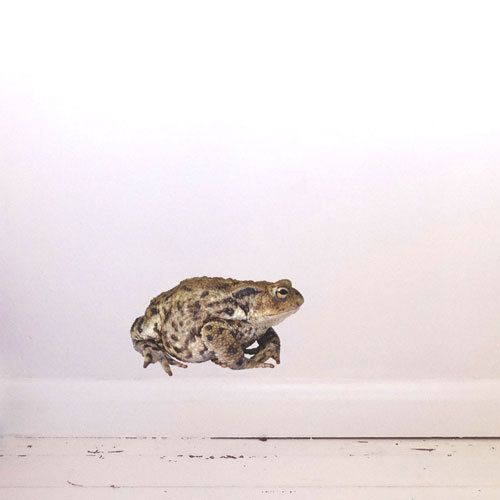 Toad Wall Decal by #JuneFoxStudio on Etsy