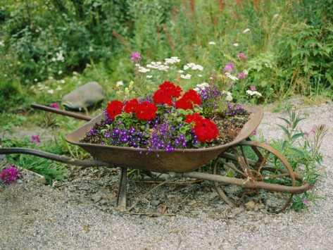 Flower Garden Ideas With Old Wheelbarrow 96 best wheel barrows images on pinterest | plants, flower