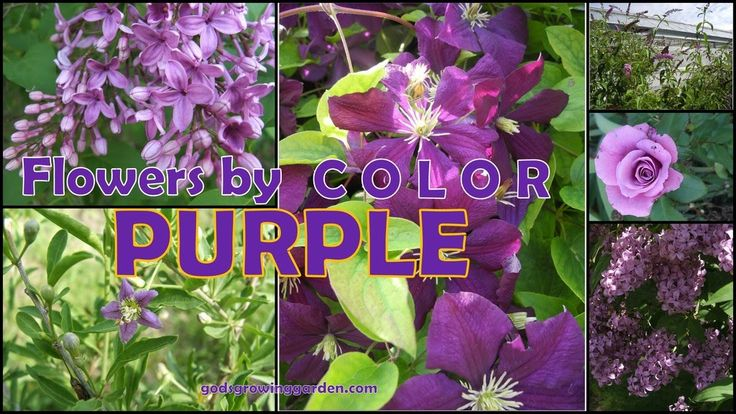 #Flowers by color - #purple by: http://www.godsgrowinggarden.com/2017/06/flowers-by-color-purple.html