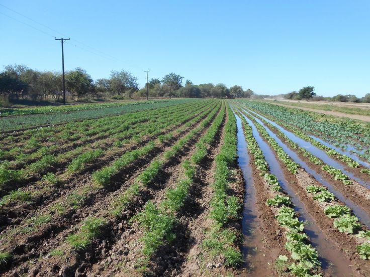 Actualizaciones+a+las+reformas+de+la+Ley+agraria