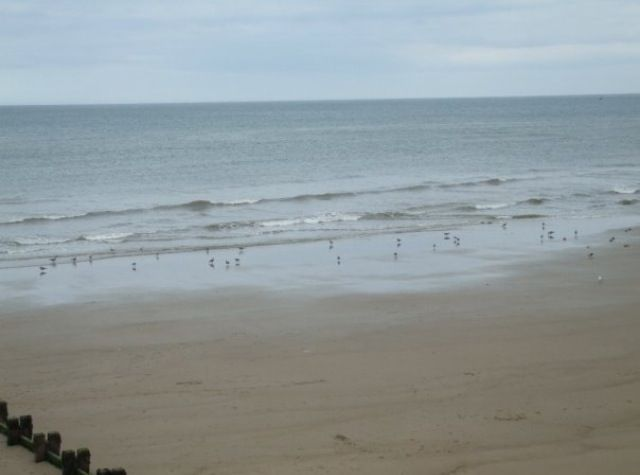 Hornsea Seagulls!