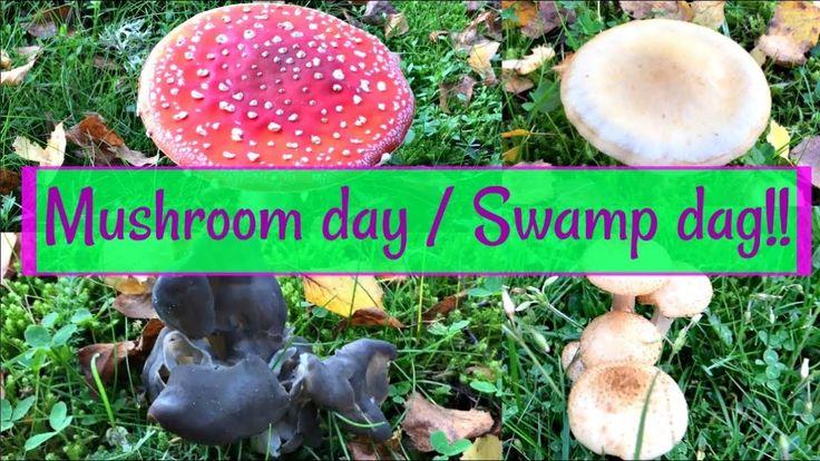 Fall season at Mushroom day! / No mail | Svamp dag! | 🇸🇪 | Vlog#67