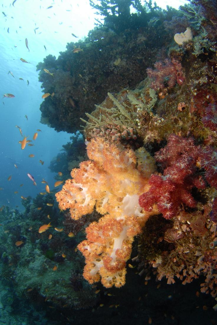 Great Barrier Reef #travel #Australia #smileshare