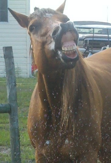 Wee says to check out the great Products that keep her Happy and Smiling at almost 20 years old.........  #horses #horsetreatment #painrelief