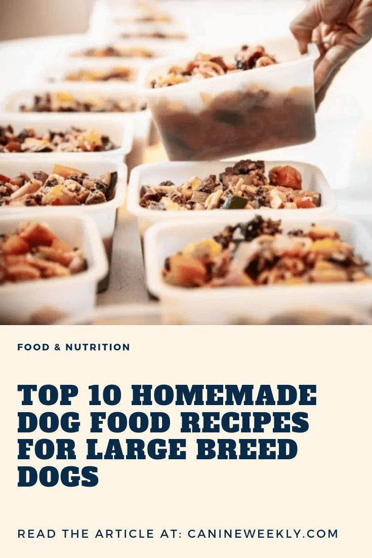 10 Best Homemade Dog Food Recipes for Large Dogs