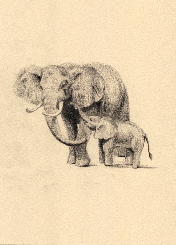 17 Best ideas about Baby Elephant Drawing on Pinterest   Drawings ...