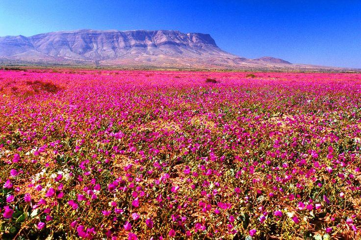 El desierto de flores