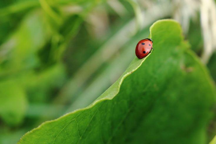 Grün ist das Leben und die Hoffnung, die Farbe der Natur, von Wiesen, Wäldern, grüner Vegetation. Was wissen Sie über Farben? Was halten Sie von diesen?