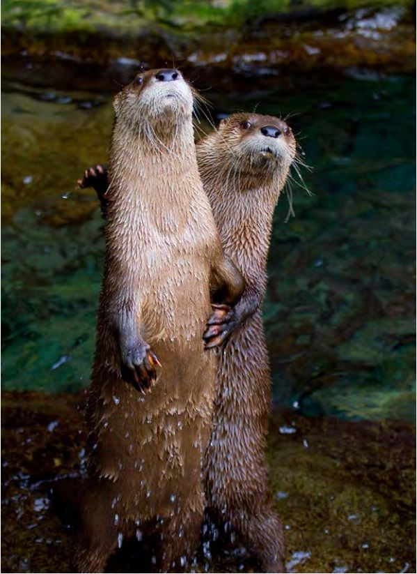 OK, It's you, me, and who dat otter?...What's up?