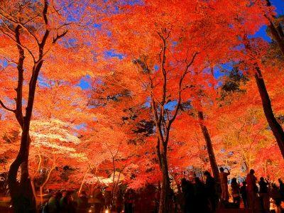 長瀞月の石もみじ公園紅葉ライトアップ