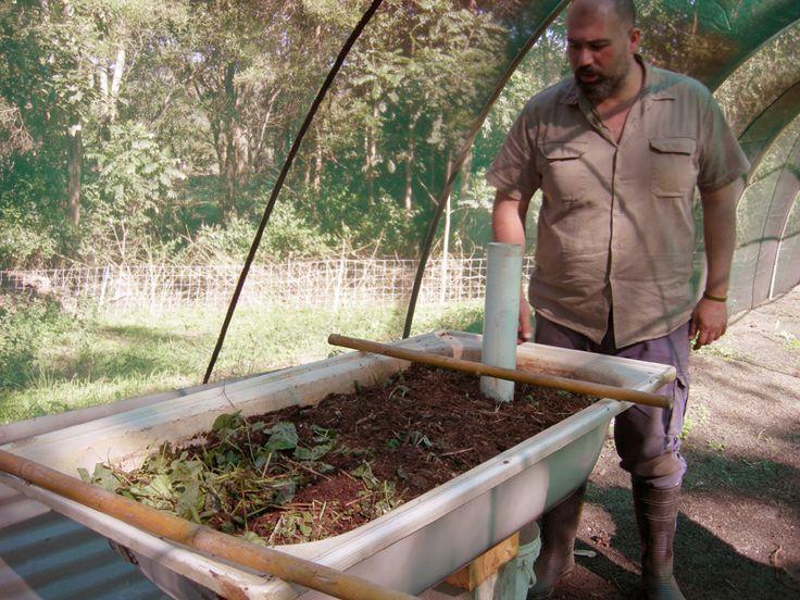 Permaculture Pilgrimage: Zaytuna Farm - bath tub worm farm