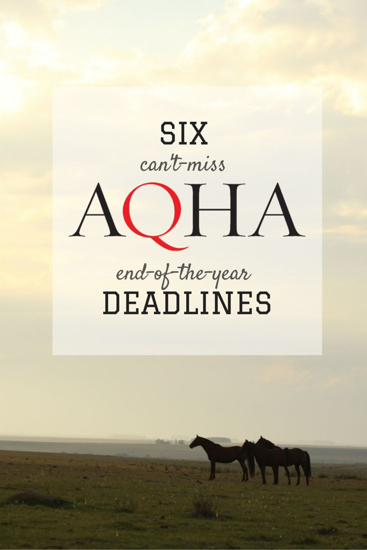 AQHA year-end deadlines