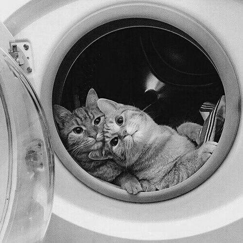 Pour un rendez-vous amoureux, bien choisir le lieu ... cela fonctionne aussi pour les chats.