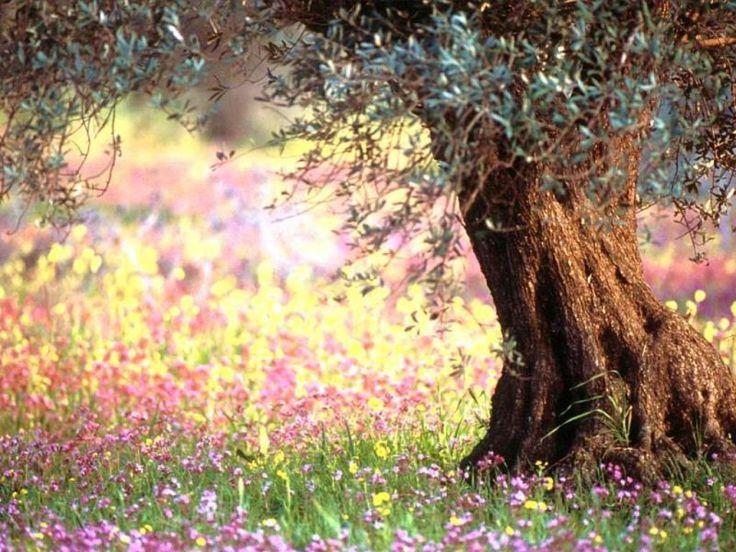 цвета цветотипа весны Помада и блеск для губ  Весеннему цветотипу подойдут мягкие золотистые, телесные и розовые тона помады. Также можно смело использовать:      Красно-оранжевый оттенок     Коралловый     Лососевый цвет     Цвет омара     Абрикосовый оттенок     Золотисто-бежевый     Цвет шампанского