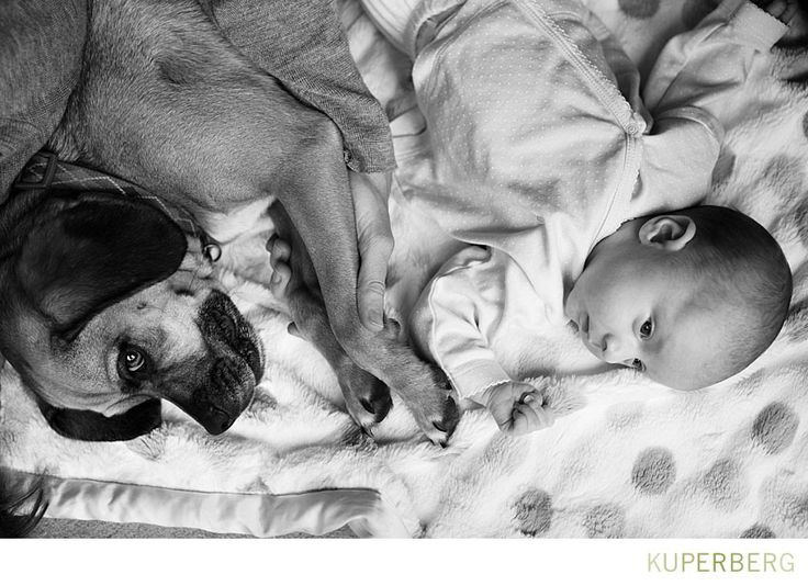 San Francisco family photo shoot with a newborn and puggle.