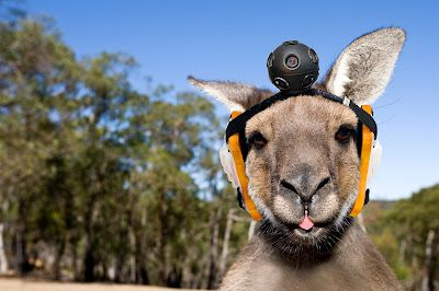 While Google street view is already letting us go inside places and even explore the Amazon, it still cannot cover most of the Australian wilderness. In order to rectify that is Google Street Roo, which straps 360º cameras to the heads of wild red kangaroos.