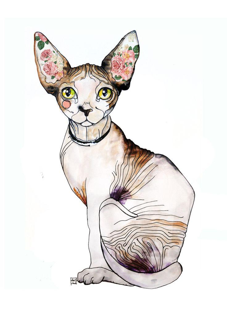 Sara Ligari more sphynx cat here