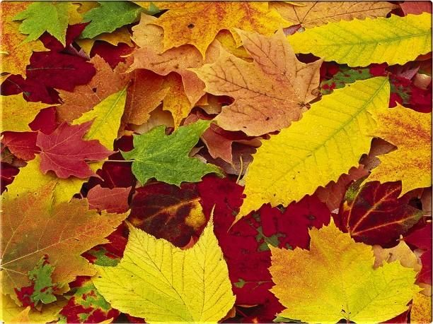 autumn colors | qweerryy: images autumn backgrounds