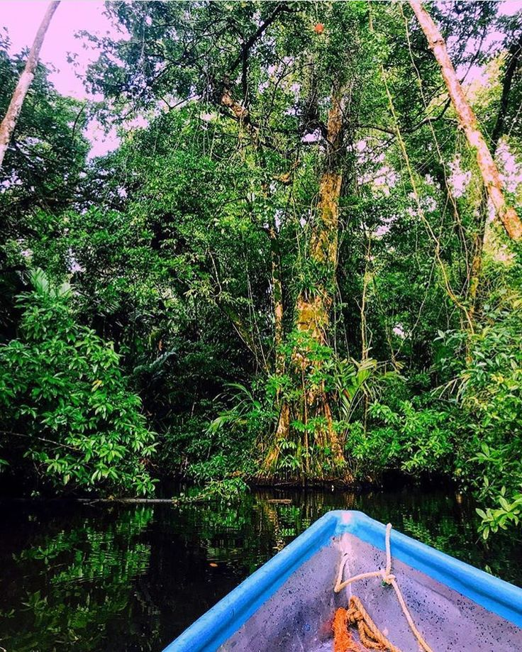 """Costa Rica's #Tortuguero National Park was a real life rainforest jungle cruise. Leatherback sea #turtles laying eggs monkeys 'hanging' around napping sloths endless birds  enormous spiders... just to name a few"" via @amyhatescarrots! #CostaRicaExperts #CostaRica"