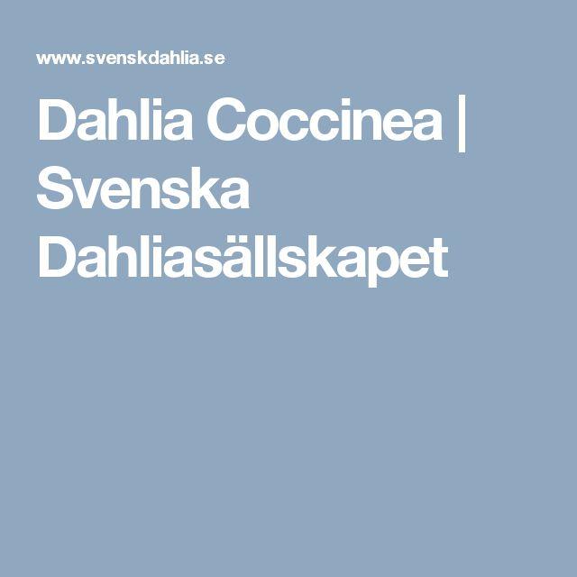 Dahlia Coccinea | Svenska Dahliasällskapet