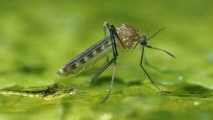 Stechmücken nutzen Regentonne und Gießkanne für Ihre Brut. (Quelle: imago)