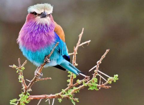 Uccellini colorati