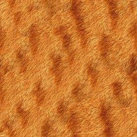 Textures Texture seamless | Cat animal fur texture seamless 09576 | Textures - MATERIALS - FUR ANIMAL | Sketchuptexture