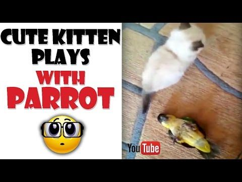 Kitten and Parrot Battle For Supremacy! But They're Really Best Buddies - We Love Cats and Kittens