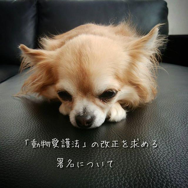 浅田 美代子さんが次回(2018年予定)の「動物愛護及び管理に関する法律」に向けた要望に関する署名活動をしておられます。  賛同してくださる方はネット署名もできますので、ご協力・拡散のほどよろしくお願い致します。  詳しく(署名)は http://miyokoasada.com/ ◎賛同者の署名は以下に届けられます。 ・内閣総理大臣 ・環境大臣 ・犬猫殺処分ゼロを目指す動物愛護議員連盟  前回(H24年)の動物愛護法の改正で地方自治体が犬猫販売業者からの引き取りを拒否できるようになりました。  また、愛護団体やボランティアさん・自治体の努力のおかげで殺処分が減少傾向にあります。  が、その裏で引き取り屋という闇のビジネス。劣悪な環境での飼育で表にでないで亡くなってる子もたくさんいます。  動物虐待の定義をより明らかにし、それに応じた厳しい罰則規定を設けてほしいと思います。  一人一人の一票が愛護法改正に反映され、動物のための愛護法になり、不幸な子が減ることを願います。  アップが遅くなってしまいすみませんがまだご存知ない方がおられましたら🙏💦…