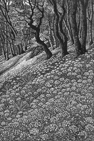 Wood engraving artist Sue Scullard portfolio of prints she is based in Kent, UK