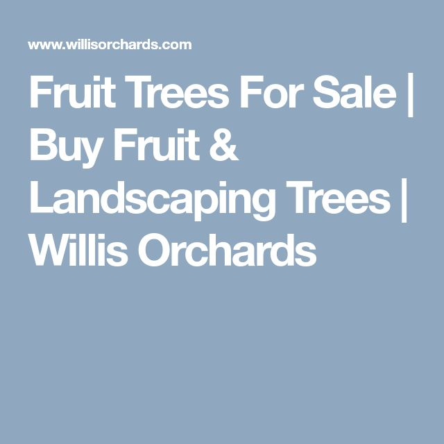 Fruit Trees For Sale   Buy Fruit & Landscaping Trees   Willis Orchards
