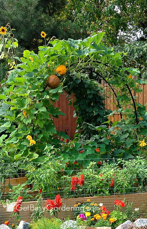 Build a squash arch to add beauty to your vegetable garden! This is an easy, inexpensive DIY project that doesn't take much time to make.