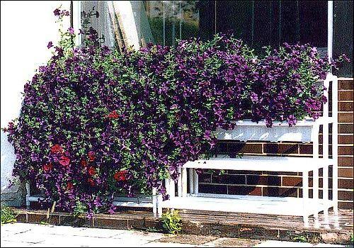 """Aby vůbec byla vidět konstrukce tohoto """"květinopádu"""", bylo nutné vyjmout několik truhlíků."""